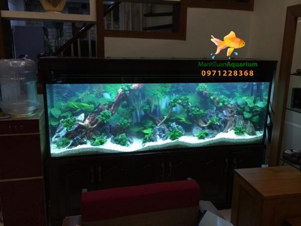 Bể cá thủy sinh cao cấp nhà anh Cường 2
