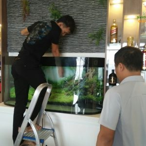 Giới thiệu bể thủy sinh của anh Hùng – nhà Mỹ Đình 4