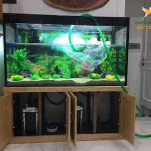 Bể thủy sinh cây nhựa – nhà chị Quỳnh biệt thự Vincom Long Biên 1