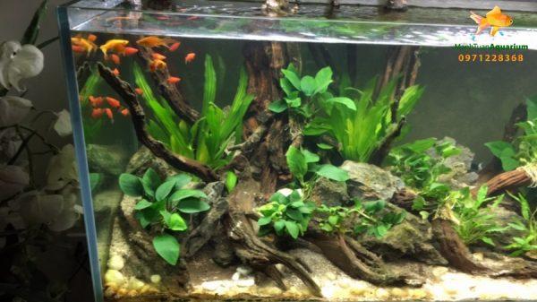 Giới thiệu bể thủy sinh cây nhựa 1