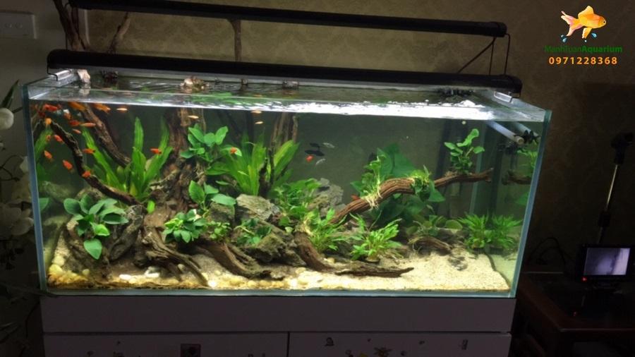 Giới thiệu bể thủy sinh cây nhựa 2