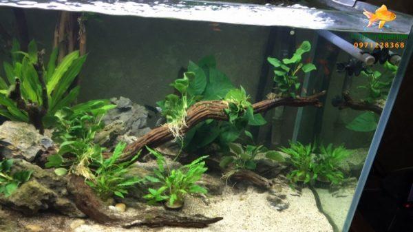 Giới thiệu bể thủy sinh cây nhựa 3