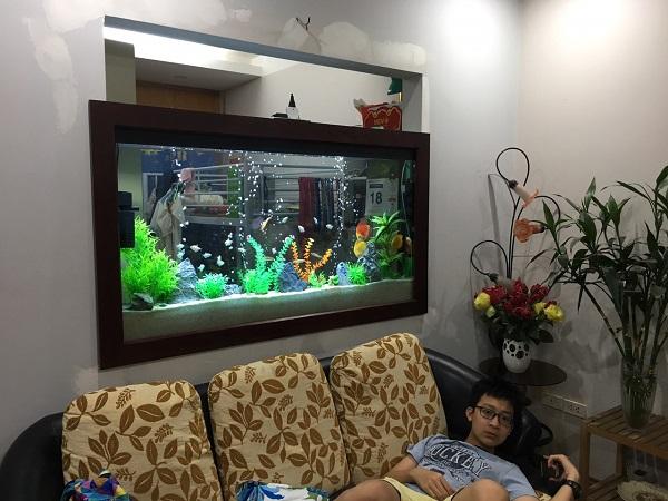 Dịch vụ vệ sinh bể cá Mạnh Tuấn  1 Dịch vụ vệ sinh bể cá cảnh tại nhà Mạnh Tuấn giá rẻ, chuyên nghiệp