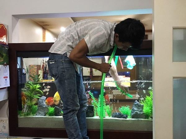 Dịch vụ vệ sinh bể cá Mạnh Tuấn 2