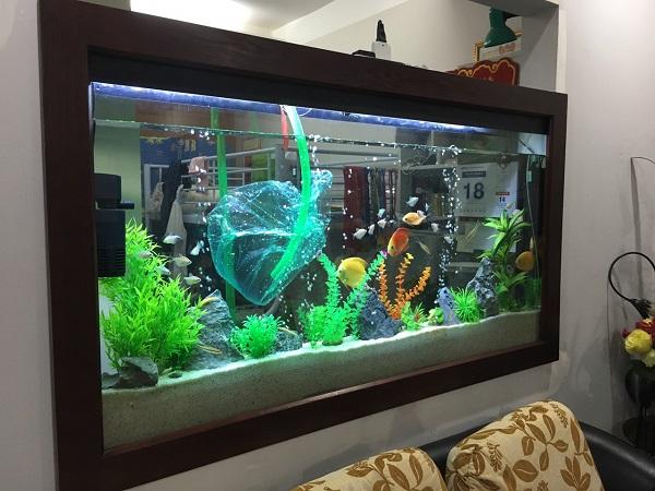 dịch vụ vệ sinh bể cá rồng