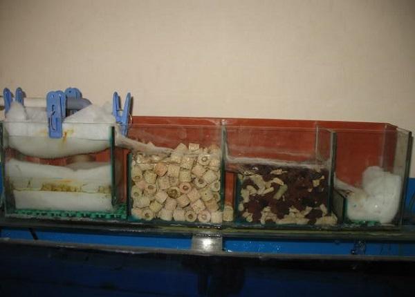Dịch vụ vệ sinh bể cá Mạnh Tuấn  5