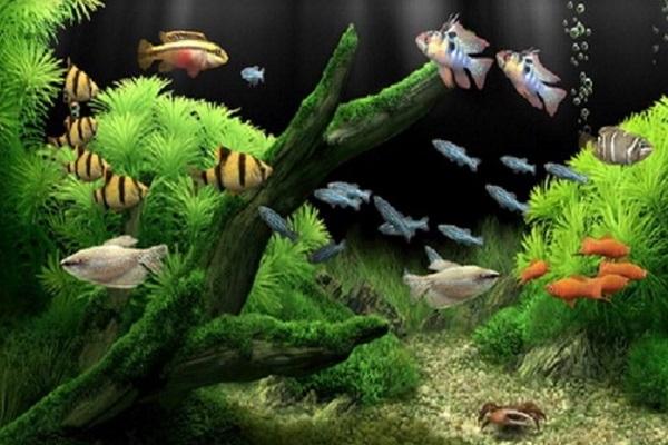 Dịch vụ vệ sinh bể cá Mạnh Tuấn  6