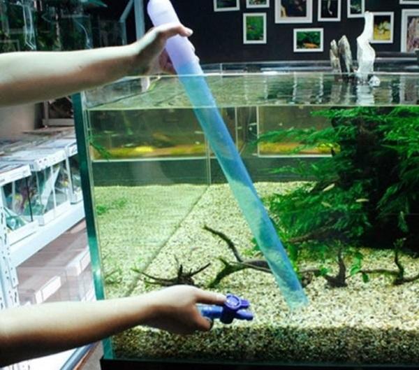 Dịch vụ vệ sinh bể cá Mạnh Tuấn  7