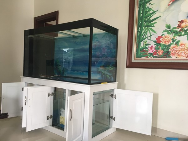 bể cá rồng 1