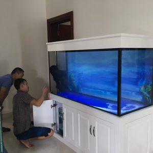 bể cá rồng 3
