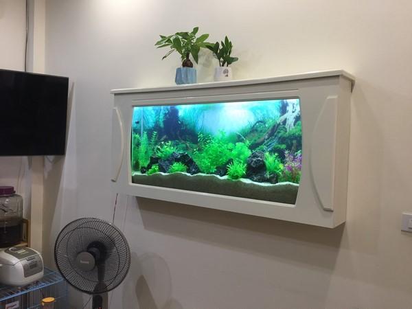 bể cá treo tường 1