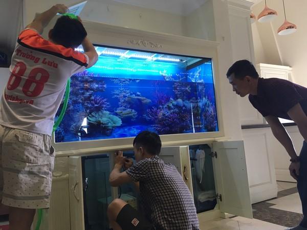 Cách lắp đặt bể cá 4