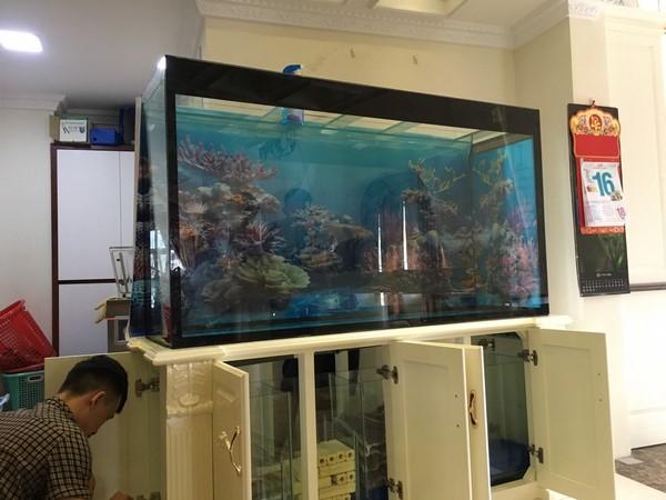 Bể cá rồng – điểm nhấn cho một không gian đẳng cấp 3