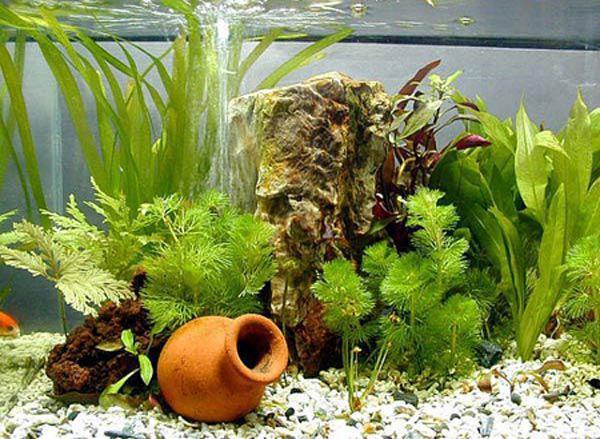 Bể cá thủy sinh mini đẹp