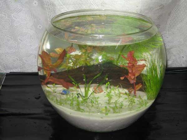 Bể cá mini tròn