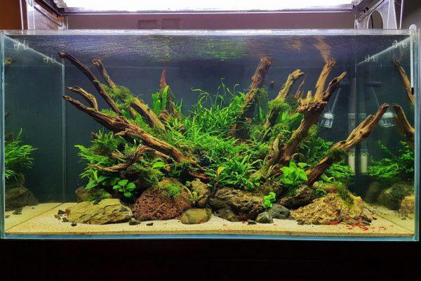 chăm sóc cây thủy sinh