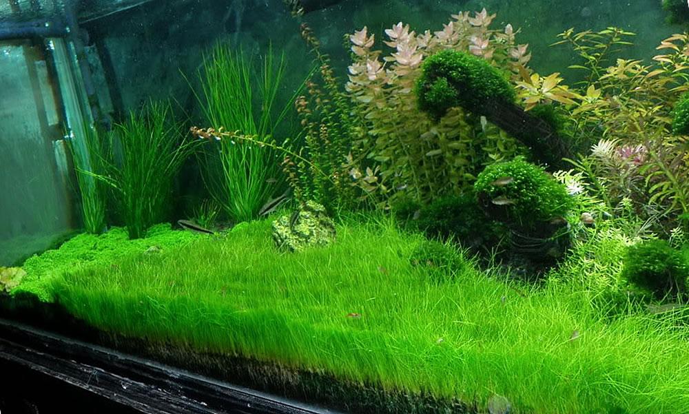 cây cỏ năng