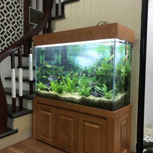 Bể cá thủy sinh nhà anh Hòa Nam Từ Liêm