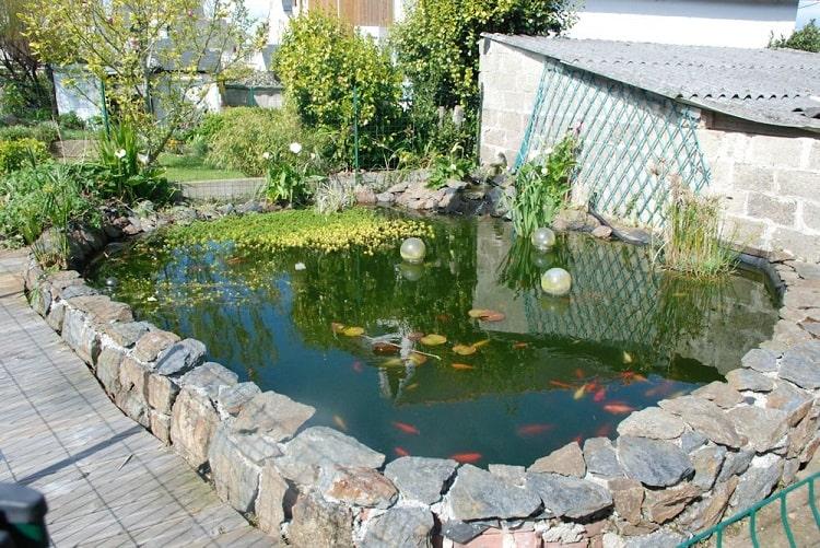 lưu ý khi xây bể cá trước nhà