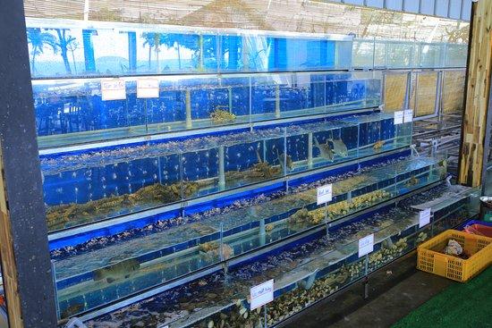 Đặc điểm của bể cá hải sản nhà hàng