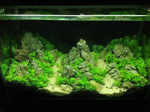 Giá của bể cá thủy sinh
