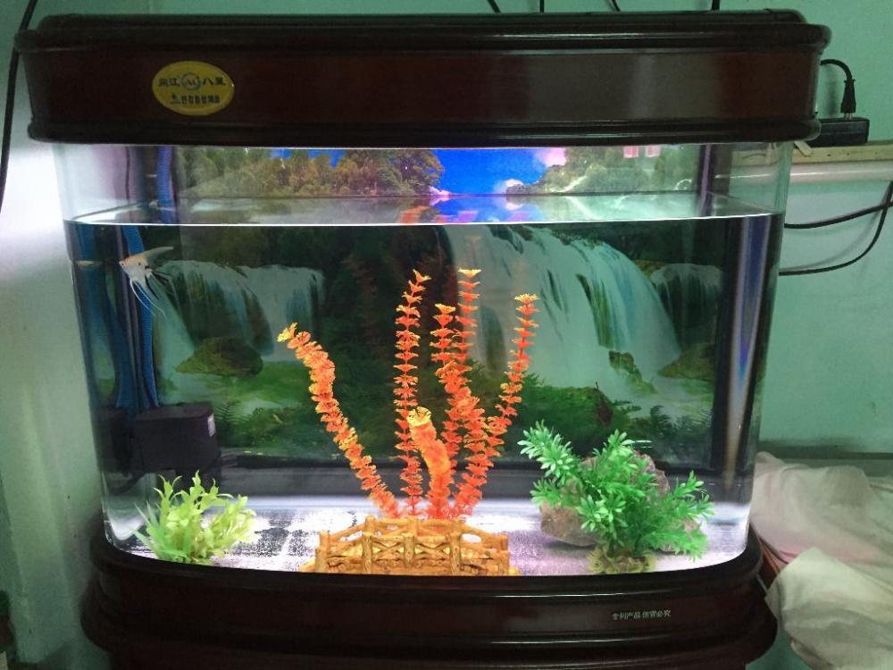 Bể cá đúc 60cm