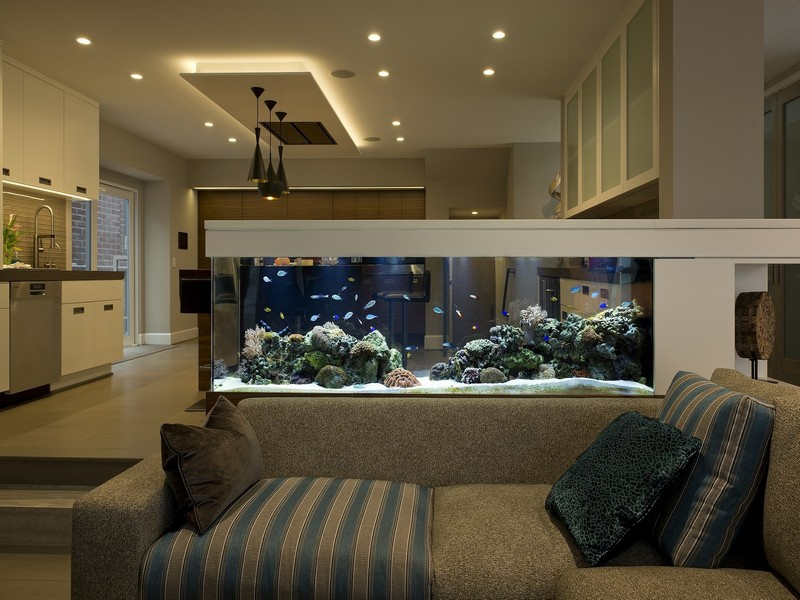 Không đặt bể cá ở sau sofa