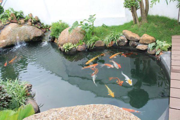 Bể cá ngoài trời đẹp