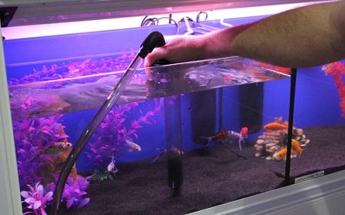 Thay nước cho bể cá rồng