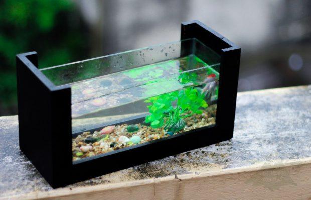 bể cá thủy sinh