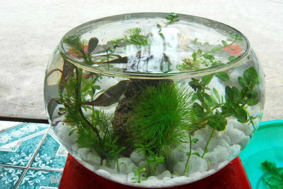Bể cá thủy tinh